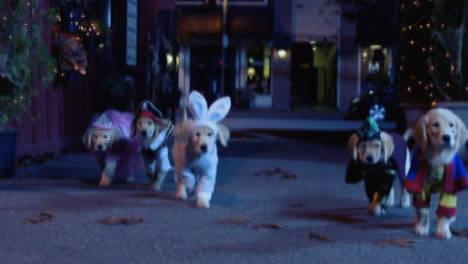 Responsabilidade - Spooky Buddies: Cachorros assombrados