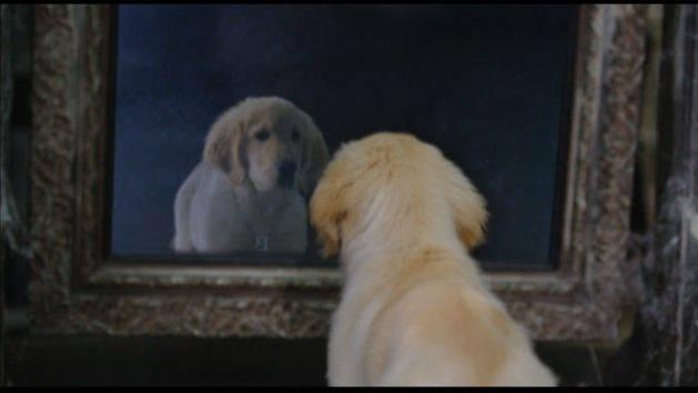 O primeiro encontro - Spooky Buddies: Cachorros assombrados