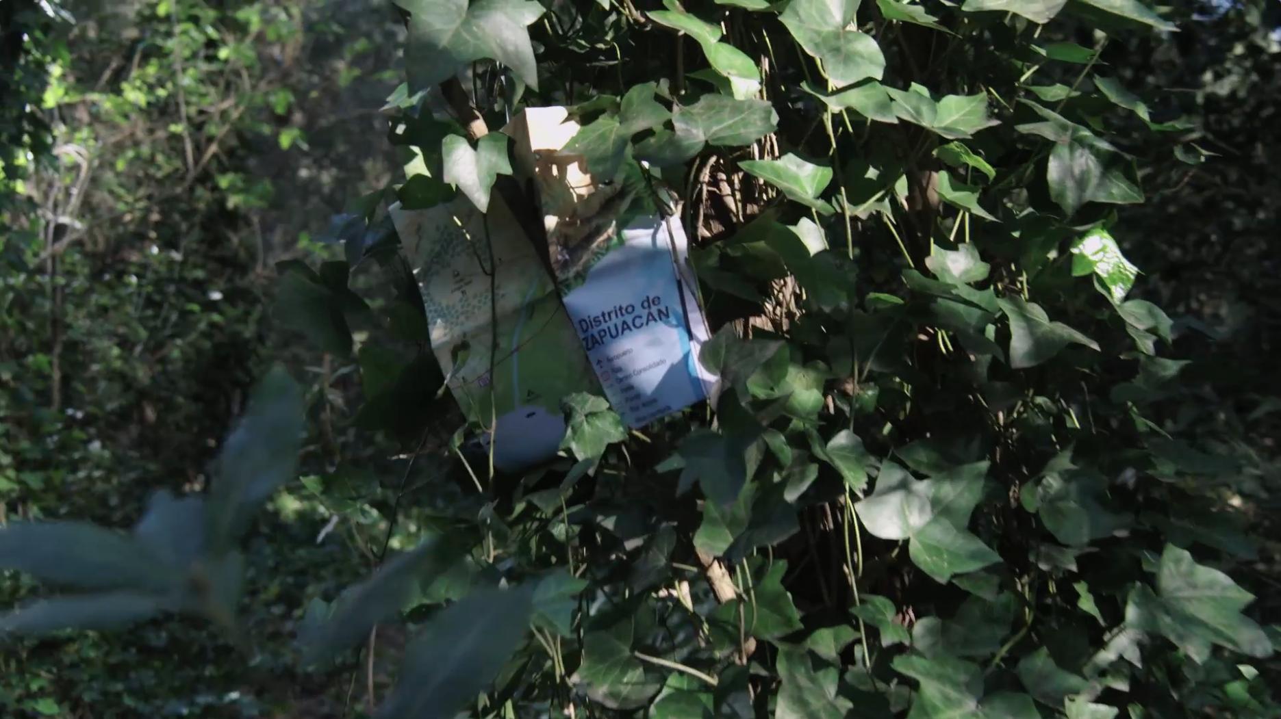 Teaser Mapa – Jungle Nest