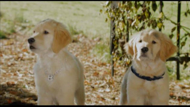 Cachorros assombrados: Farejador - Spooky Buddies