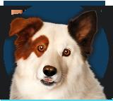 Stan, o Cão Blogueiro